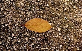 Wallpaper leaf, asphalt, autumn