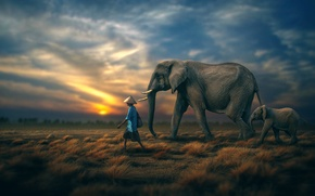 Picture the sky, people, horizon, elephants
