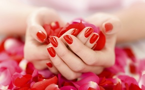 Picture hands, petals, gently, manicure, red nail Polish