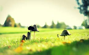 Picture grass, glade, mushrooms, toxic, green, mushrooms, poisonous