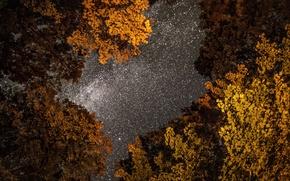 Picture autumn, the sky, photo, photographer, night, Greg Stevenson, star