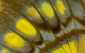 Picture butterfly wing, macro, the wing, texture, butterfly