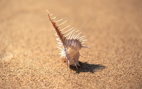 Wallpaper focus, Shell, needles, minimalism, sand