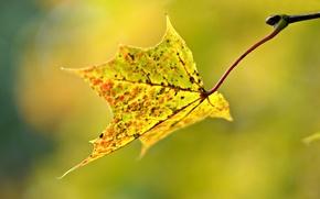 Picture autumn, macro, sheet, blur