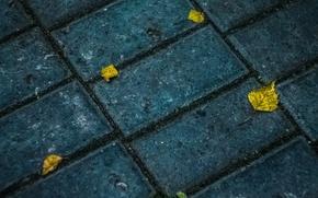 Picture autumn, asphalt, texture, yellow