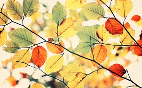 Picture colors, sky, leaves, autumn, Colorful autumn
