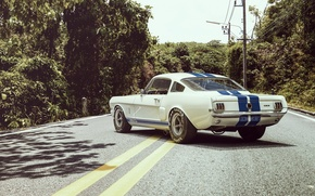 Picture Ford, Shelby, Auto, Road, Ford, Muscle, Car, Shelby, Kar, Oil, GT350R