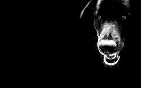 Picture black, minimalism, Dog
