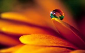 Picture flower, drop, petals