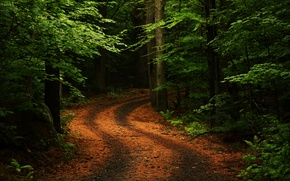 Wallpaper road, forest, summer