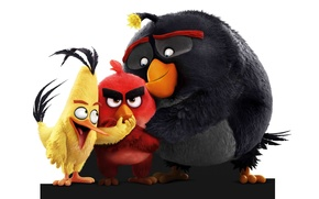 Picture cinema, animation, Red, game, bird, cartoon, movie, series, film, friends, angry, Angry Birds, adventure, sugoi, …