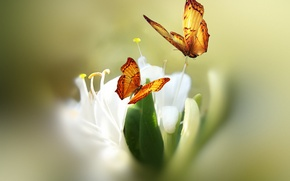 Picture flower, butterfly, paint, styling, Josep Sumalla