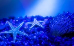 Wallpaper water, blue, stones, glow, shell, Morska Zvezda, the bottom of the sea