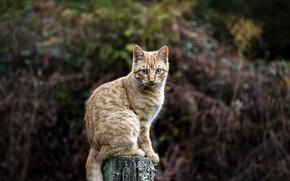 Wallpaper cat, direct look, branch