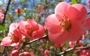 Picture spring, pink flowers, Flowering