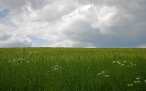 Wallpaper Field, green, clouds