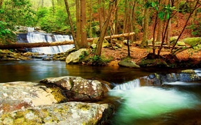 Picture forest, trees, autumn, early, creek, stream, fall