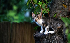 Wallpaper tree, the fence, kitty