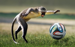 Picture animal, football, the game, the ball, monkey, game, monkey, football, ball, playing