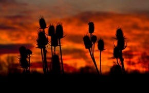 Picture the sky, clouds, macro, plant, stem, silhouette, glow