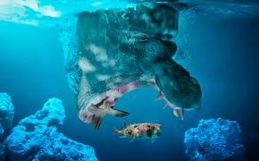 Picture fish, Hippo, caught