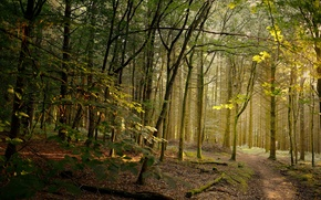 Picture path, forest, sunlight