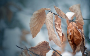 Picture cold, winter, autumn, leaves, snow, tree, mood, branch, frost, macro Wallpaper, autumn Wallpaper, winter Wallpaper