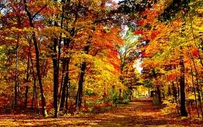 Picture foliage, Autumn, Wisconsin, USA, Park vlak mills