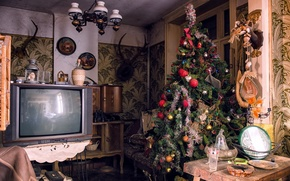 Picture room, tree, holiday, TV