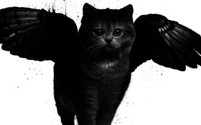 Picture cat, style, wings, art, black and white