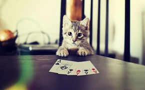 Picture Card, Cat, Poker, Cat, Cat, Poker, Paws