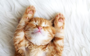 Picture kitty, legs, red, cute, kittens