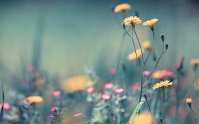 Picture field, summer, grass, macro, flowers, ease, plants, yellow, blur, pink