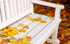 Picture autumn, leaves, bench, nature, yellow, shop, shop, white, bench, maple