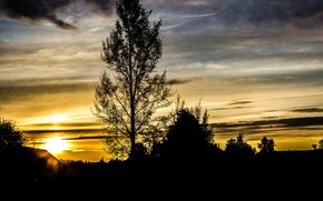 Picture the sky, tree, Sunset, village, silhouette