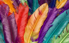 Picture macro, color, feathers