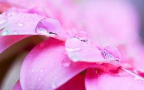 Wallpaper flower, water, drops, macro, Rosa, pink, petals