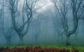 Picture forest, landscape, nature, fog