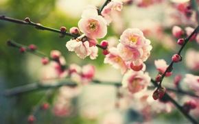 Wallpaper flowers, nature, branch, plant, spring, blur, buds, flowering, bokeh