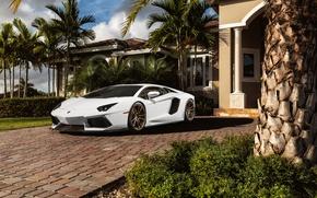 Picture white, palm trees, Lamborghini, before, white, mansion, Lamborghini, front, LP700-4, Aventador, Lamborghini, aventador