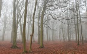 Picture autumn, forest, landscape