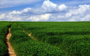Picture road, field, landscape