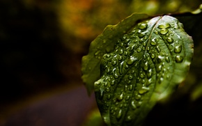 Picture Water, Autumn, Rain, Macro, Forest, Leaf, Reflections, Droplets
