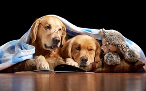 Picture toy, books, glasses, bear, pair, blanket, reading, readers, retrievers