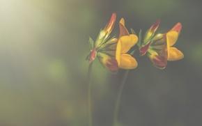 Picture flowers, bokeh, petals, stalks, yellow petals