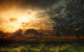 Picture the sky, trees, birds, treatment
