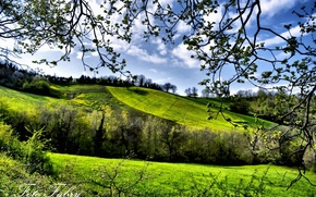 Picture trees, fields, spring, greenery
