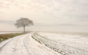 Picture winter, road, field, snow, tree