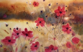 Wallpaper flowers, watercolor, cosmos