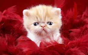 Wallpaper look, kitty, fluff